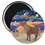 X-Star-Shetland Pony Magnet Magnets