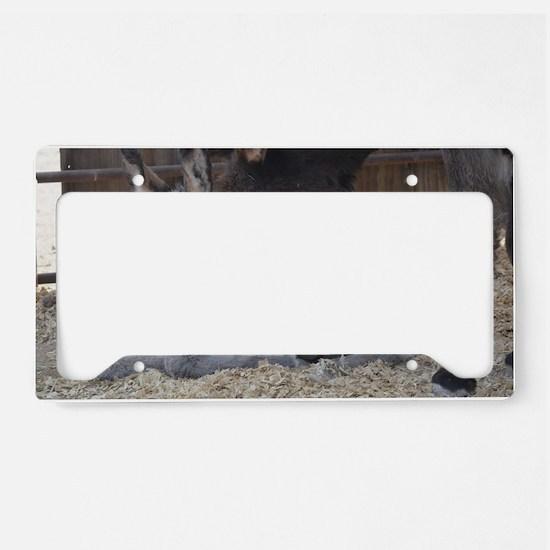Eeyore and Angel License Plate Holder