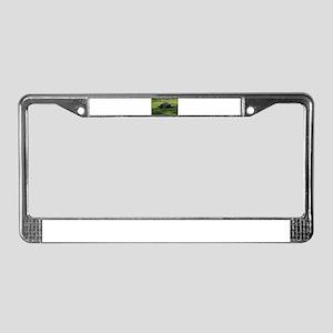 tortoise License Plate Frame