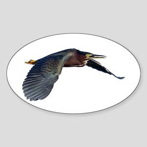 Green Heron Sticker