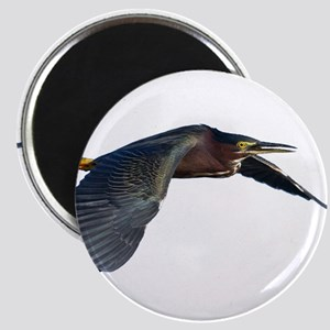 Green Heron Magnets