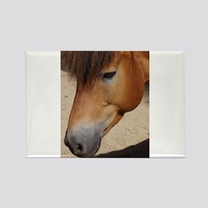 Wonderful Horse Animal Magnets