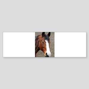 Wonderful Horse Animal Bumper Sticker