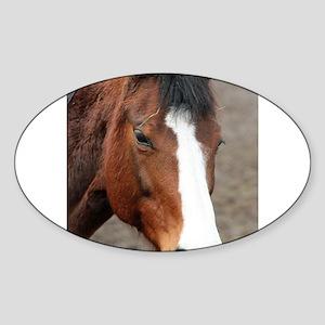 Wonderful Horse Animal Sticker