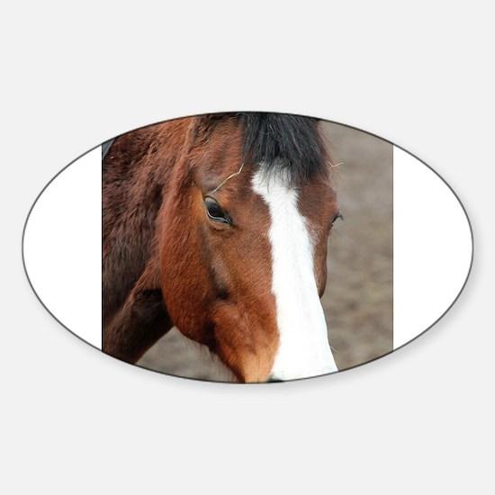 Wonderful Horse Animal Decal