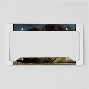 Sunny Seal License Plate Holder
