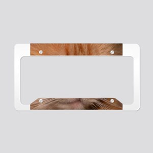 Gorgeous Orange Kitty License Plate Holder