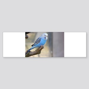 Blue Budgie Bumper Sticker