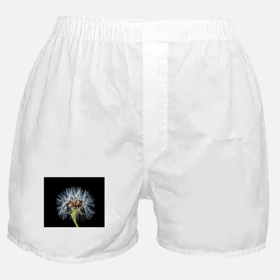 Funny Dandelion seeds blowing in the wind Boxer Shorts