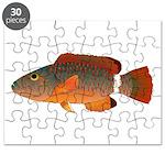 Ringtail Maori Wrasse Puzzle