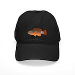 Ringtail Maori Wrasse c Baseball Hat