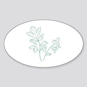 Parsley Herb Plant Sticker