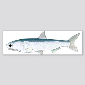 California Northern Anchovy Bumper Sticker