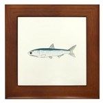 California Northern Anchovy Framed Tile
