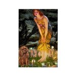 Fairies & Ruby Cavalier Rectangle Magnet (10 pack)