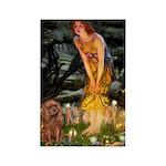 Fairies & Ruby Cavalier Rectangle Magnet