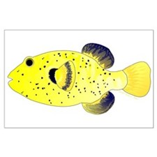 Guineafowl Puffer Yellow Posters