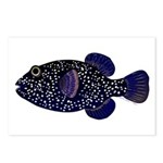 Guineafowl Puffer Black Postcards (Package of 8)