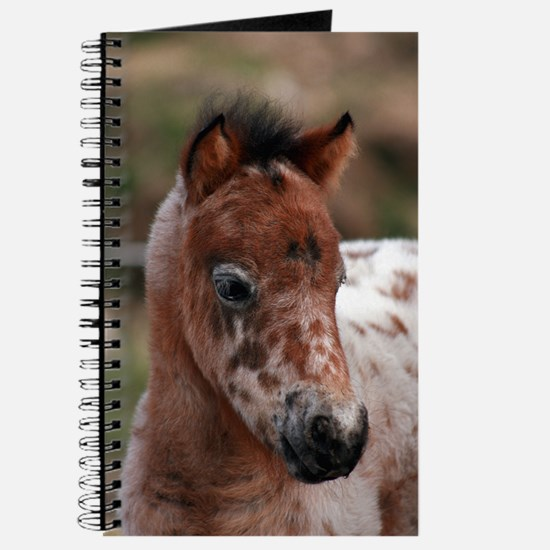 """""""Knabstrup foal 1"""" Journal"""