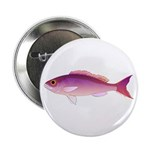 Crimson Jobfish Opakapaka 2.25