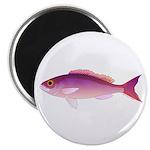 Crimson Jobfish Opakapaka Magnets