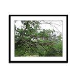 Mighty Oak - Framed Panel Print