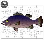 Atlantic Wreckfish Puzzle