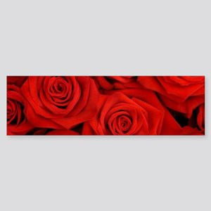 modern romantic red rose petals Bumper Sticker