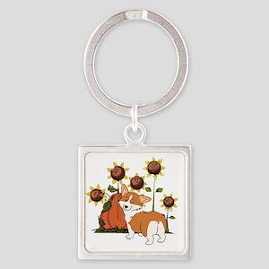 Pembroke Welsh Corgi, Corgi, Corgi dog, dog, herdi
