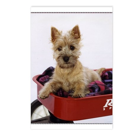 Baby Cairn Terrier Postcards (Package of 8)