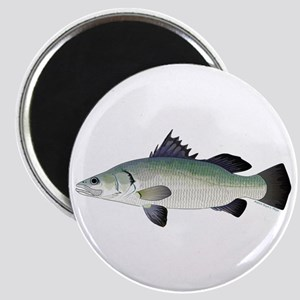 Barramundi Magnets