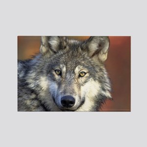 Wolf 024 Magnets