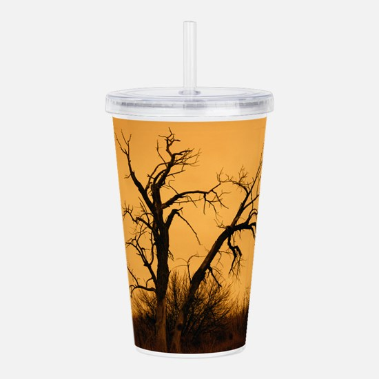 Sunset on old tree Acrylic Double-wall Tumbler