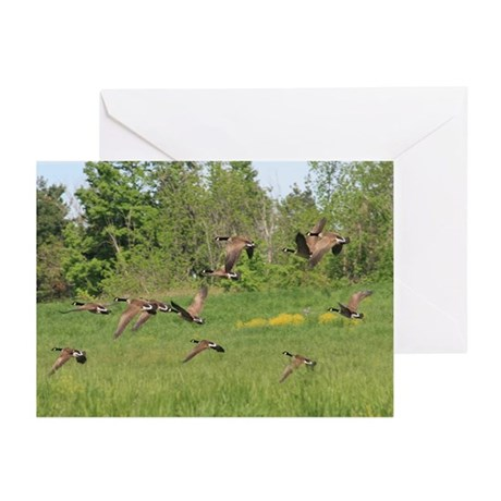 Geese in Flight Greeting Cards (Pk of 10)