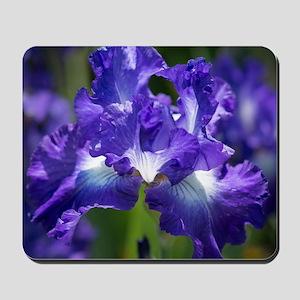 iris garden Mousepad