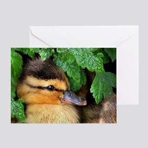 Mallard Duckling Greeting Cards
