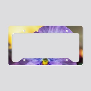 Lavender Pansy License Plate Holder