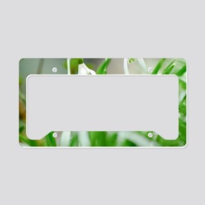 Snowdrops in spring License Plate Holder