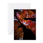 Fall Color (pk Of 20) Greeting Cards