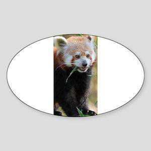 Red Panda 005 Sticker