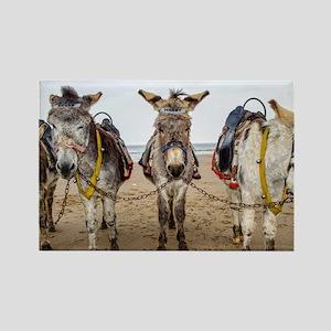 Donkeys Magnets