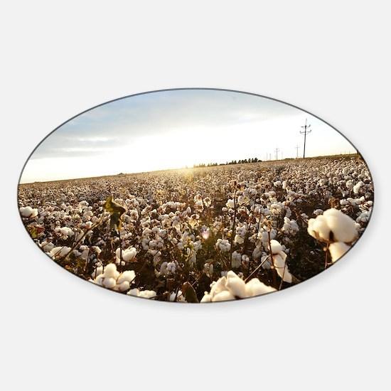 Bright, White Cotton Field Sticker (Oval)
