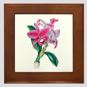 Tropical Pink Cattleya Orchid by Loudo Framed Tile