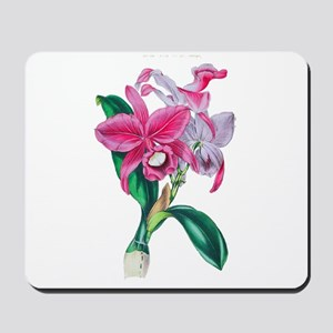Tropical Pink Cattleya Orchid by Loudon Mousepad