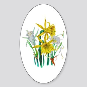 Daffodils and Narcissus by Loudon Sticker (Oval)