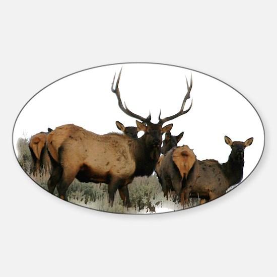 Trophy bull elk 2 Decal