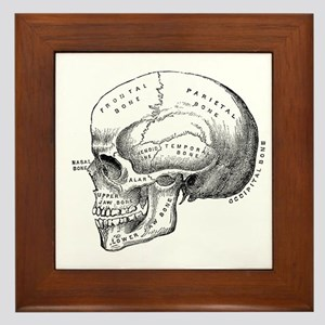 Anatomical Framed Tile