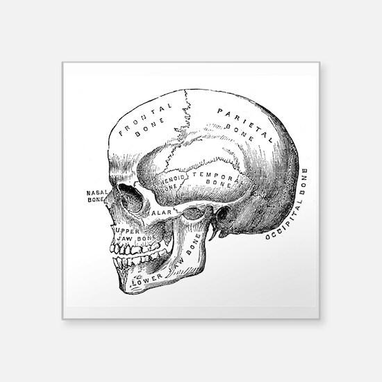 Anatomical Sticker