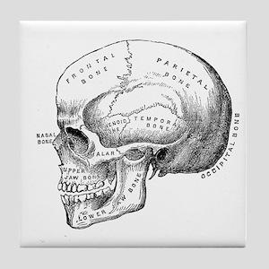 Anatomical Tile Coaster