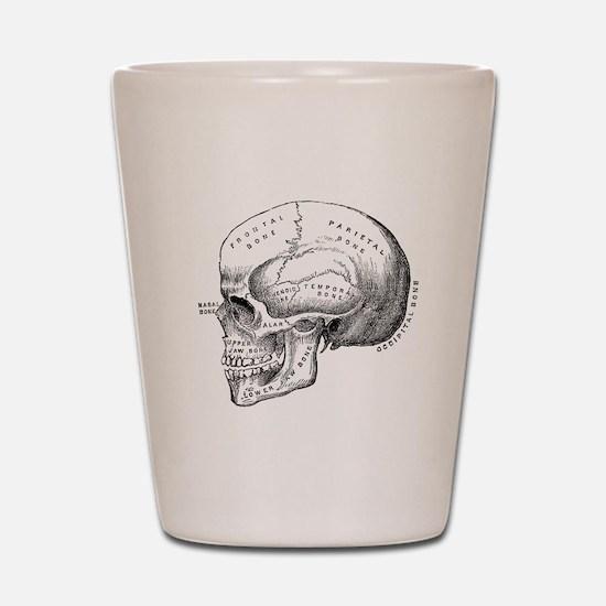 Anatomical Shot Glass